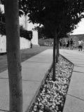 Деревья на дороге Стоковое Изображение RF