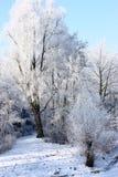 Деревья налет инеи Стоковое фото RF