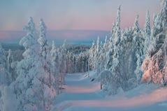 Деревья на заходе солнца в зиме Стоковое Фото