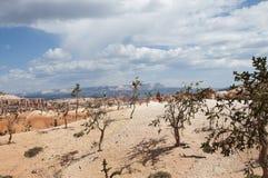 Деревья на каньоне Bryce Hoodoos ландшафт пустыни Стоковые Изображения