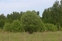 Деревья на краю поля под ясным голубым небом стоковые изображения