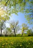 Деревья на луге с одуванчиками Стоковые Фото