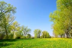 Деревья на луге с одуванчиками стоковая фотография