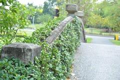 Деревья на мосте Стоковое Изображение RF