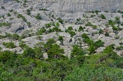 Деревья на наклонах Стоковое Изображение RF