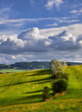 Деревья на наклоне Стоковые Фотографии RF