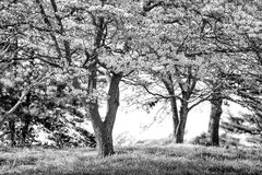 Деревья на национальном парке кузницы долины Стоковые Изображения RF