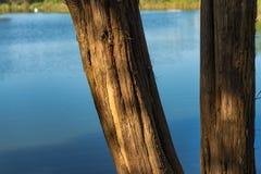 Деревья на озере Стоковые Изображения