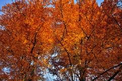 Деревья на осени Стоковая Фотография