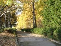 Деревья на переулке Стоковые Изображения RF