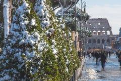Деревья на подходе к Colosseum Стоковая Фотография RF