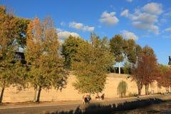 Деревья на портовом районе Стоковое Фото