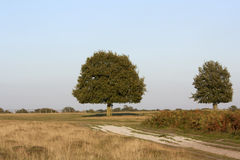 Деревья на поле Стоковые Фотографии RF