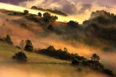Деревья на поле Стоковые Изображения