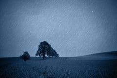 Деревья на полях весны Стоковое фото RF