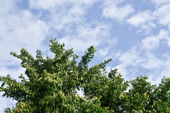Деревья на предпосылке неба Стоковое Изображение RF
