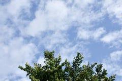Деревья на предпосылке неба Стоковые Фотографии RF