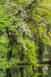 Деревья на пруде Стоковые Фотографии RF