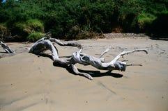 Деревья на пляже Стоковое фото RF