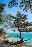 Деревья на пляже Стоковая Фотография RF
