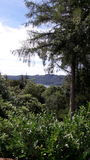 Деревья на районе озера Стоковые Фотографии RF