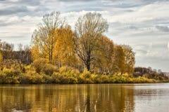 Деревья на речном береге Стоковое Изображение