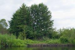 Деревья на речном береге Стоковые Изображения
