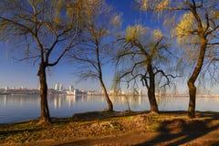 Деревья на речном береге i Стоковая Фотография RF