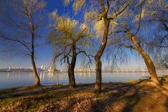 Деревья на речном береге III Стоковые Изображения RF