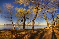Деревья на речном береге IV Стоковые Изображения RF