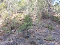 Деревья на скале Стоковое Фото