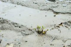 Деревья на том основании к грязи стоковое фото