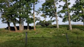 Деревья на холме Стоковые Фото