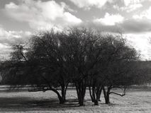 Деревья на холме без листьев Стоковое Фото