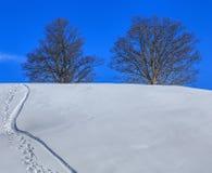 Деревья на холме в зиме Стоковое Изображение