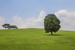 Деревья на холме с зеленой травой Стоковые Изображения RF