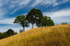Деревья на холме Стоковое Изображение