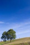 Деревья на холме Стоковая Фотография