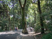 Деревья на Meiji JingÅ «Srine, токио, Японии стоковые фотографии rf