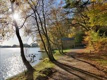 Деревья на Talkin Tarn на день осени. Стоковое Фото
