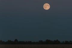 Деревья неба поля луны Стоковые Изображения