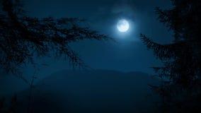 Деревья обрамляя лес ночи с луной видеоматериал