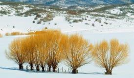 Деревья огня Стоковые Фото
