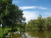 Деревья около озера в лете против голубого неба Стоковые Изображения