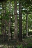Деревья около дома Стоковое Фото