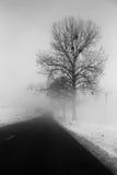 Деревья около дороги в тумане Стоковая Фотография RF