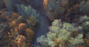 Деревья осени, вид с воздуха трутня видеоматериал