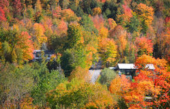 Деревья осени в Вермонте около Waterville Стоковые Изображения