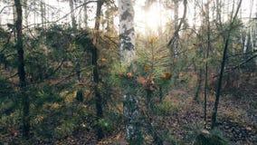 Деревья осени в дневном свете солнечности леса видеоматериал