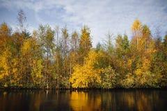 Деревья осени в желтых цветах осенью Стоковое Фото